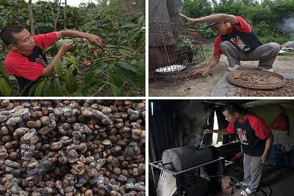 Цикъл на производство на кафе Копи Лувак
