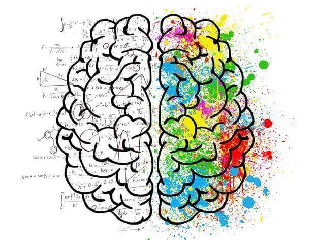 лява и дясна страна на мозъка