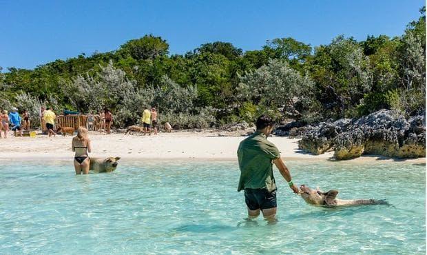 плажът на прасетата
