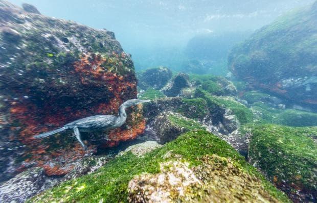 подводен океан