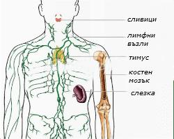 Immune organs