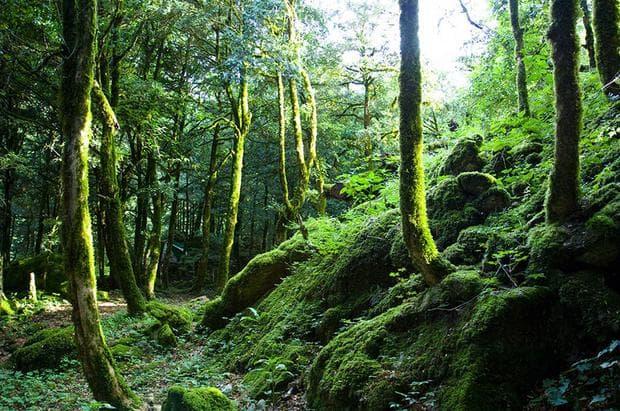 Снимка на гори в Абхазия