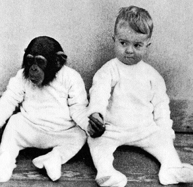 Опит с маймуна и дете