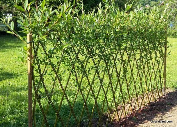 декоративна ограда с бяла върба