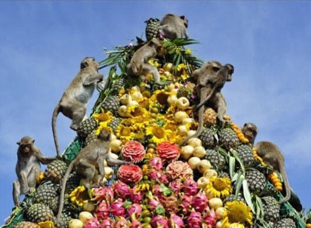 фестивал на маймуната