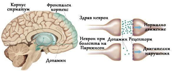 Допамин и болестта на Паркинсон