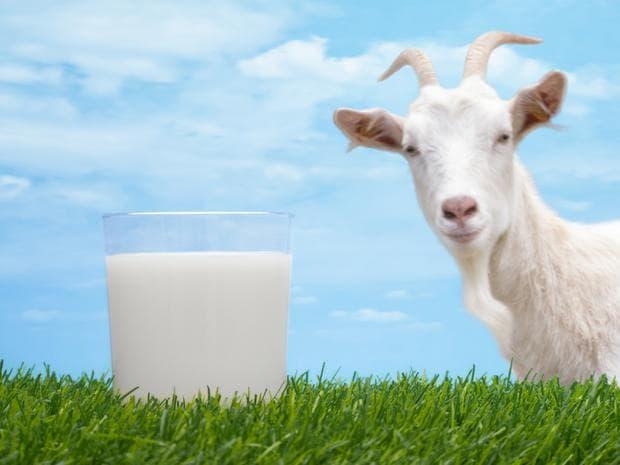 козе мляко