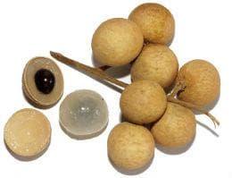 плод лонган