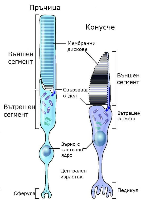 Устройство на пръчица и конусче