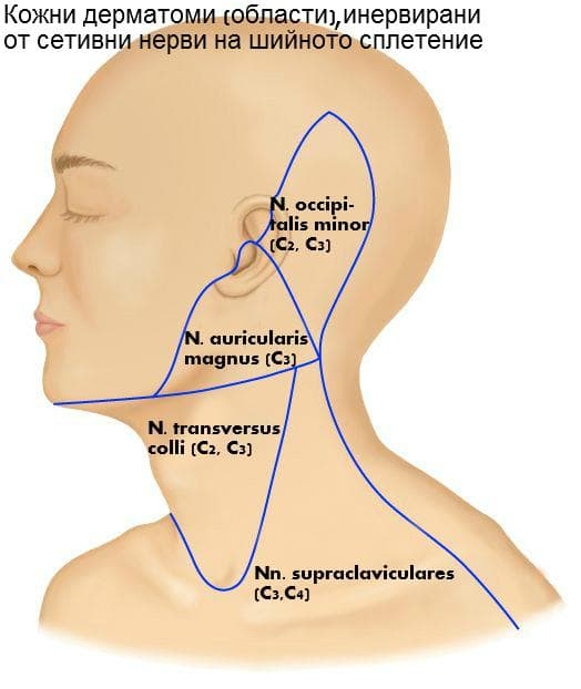 Кожни дерматоми на сетивни шийни нерви