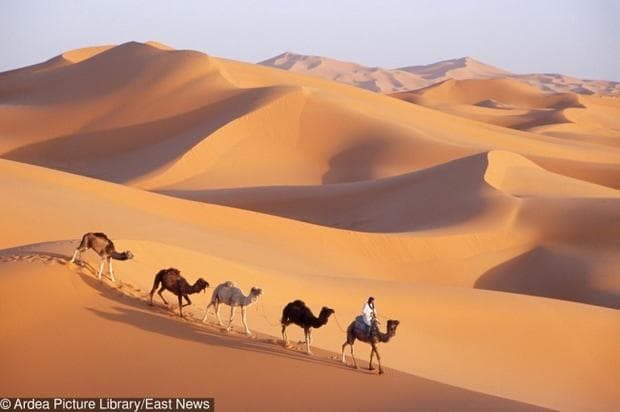 камили