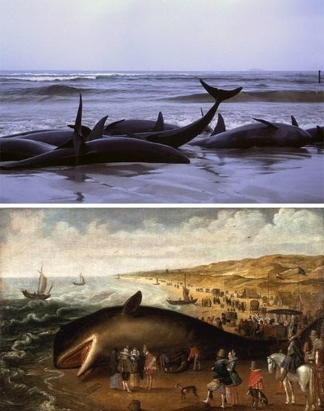 Китове, изхвърлени на брега