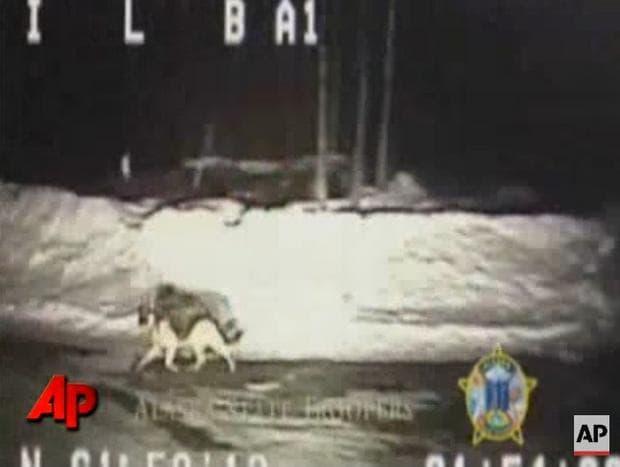 Куче на пътя
