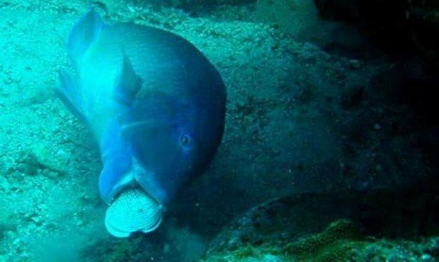 Риба с мида