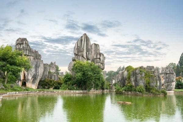 Каменната гора