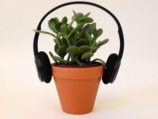 Дърво на живота със слушалки