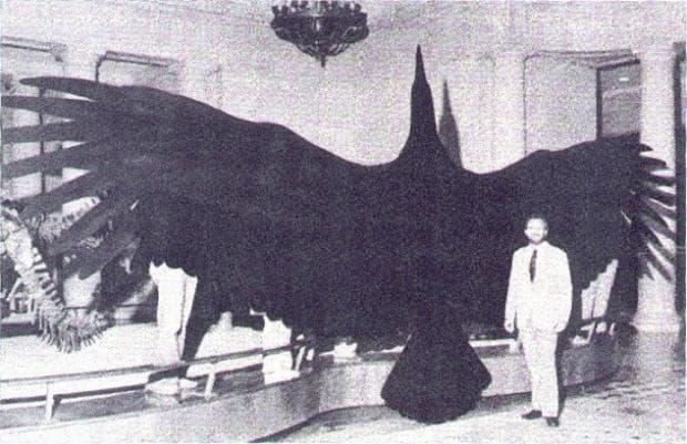 Най-голямата птица в света