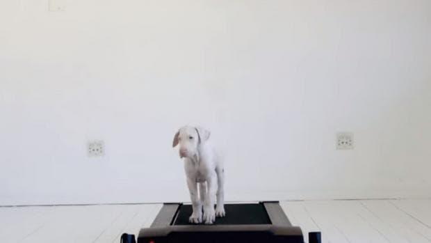 куче 2