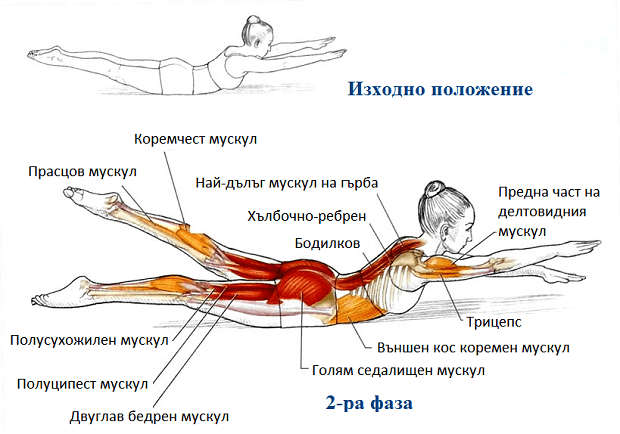 Пилатес упражнения - Плуване