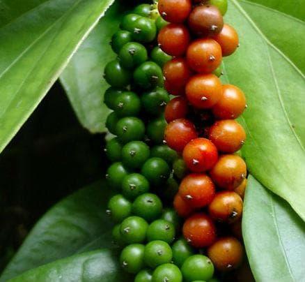 зрели и незрели плодове