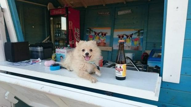 бар за кучета