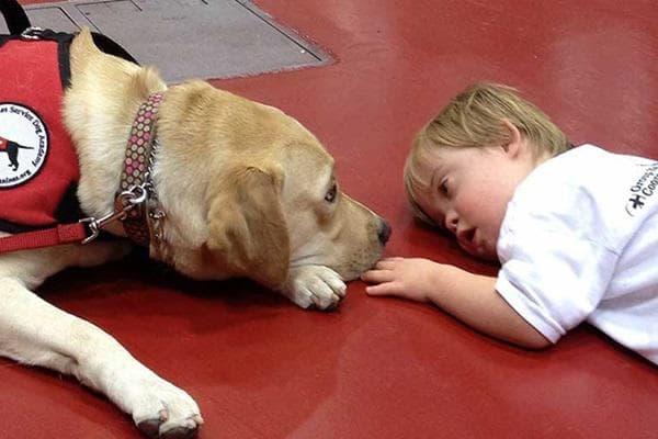 Терапия с куче