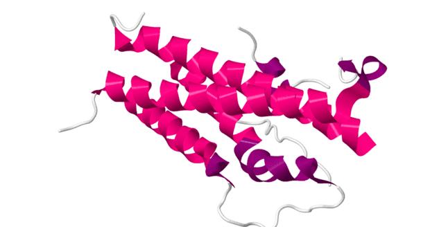 човешки плацентарен лактоген