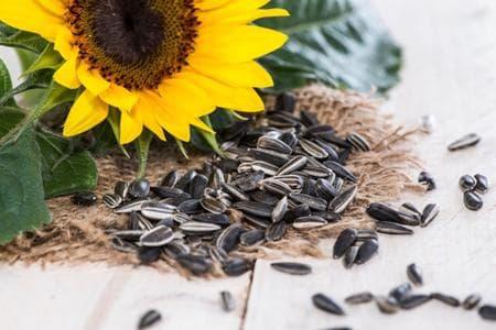 семки от слънчоглед