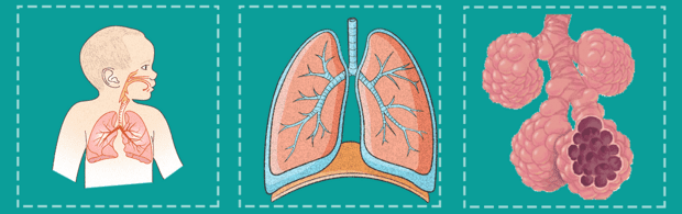 дихателна система