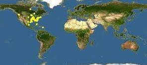 карта див ям