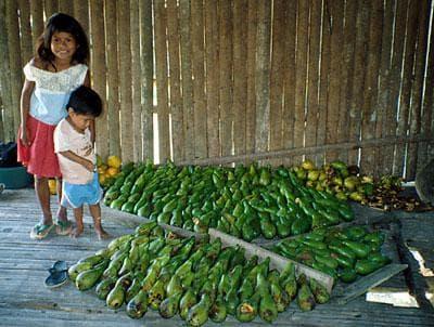 плодове авокадо