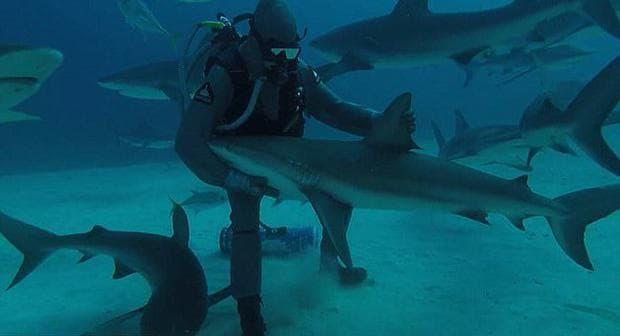 Морски биолог гали акула край Бахамските острови