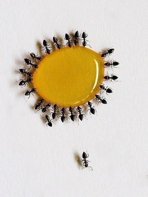 Колония от мравки