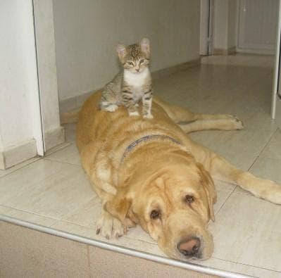 "Ветеринарна клиника ""Вита Вери"""