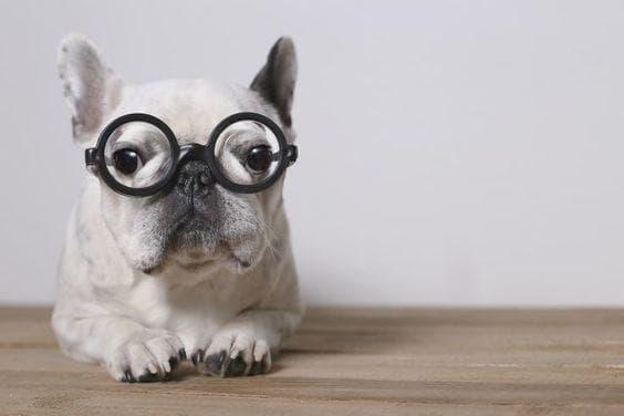 Защо кучетата са страхотни