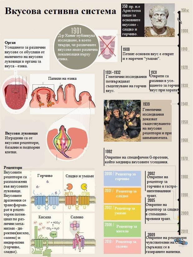 вкусова сетивна система