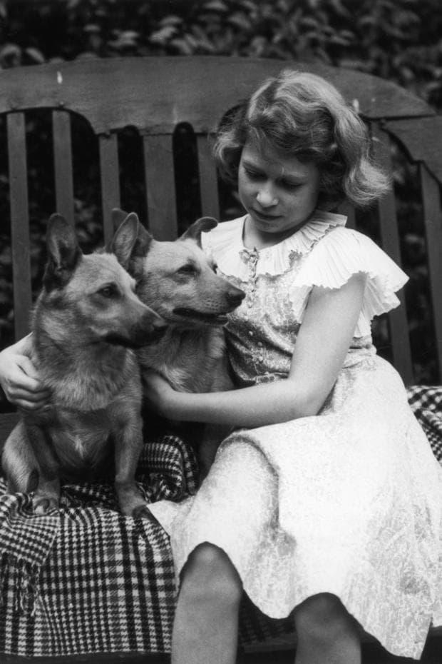 Кучешка любов