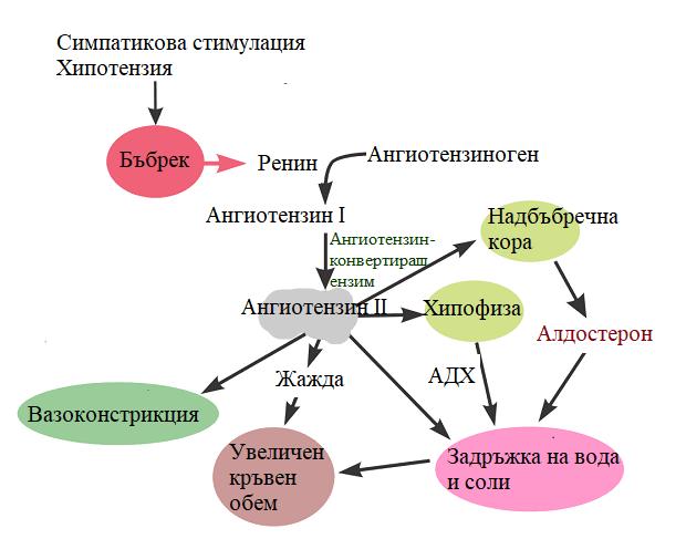ангиотензин