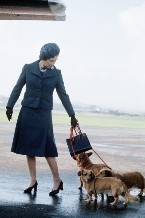 Елизабет пътува със своите коргита