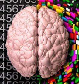 функционална асиметрия на мозъчните хемисфери