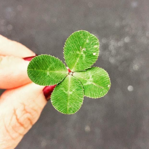 Детелина - символ на късмет