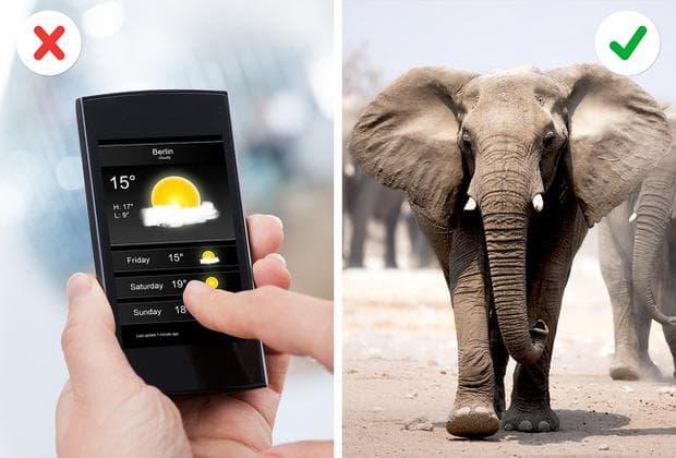 слон и телефон