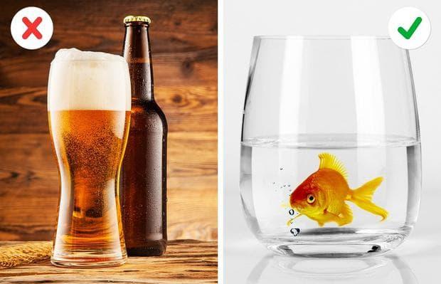бира и златна рибка