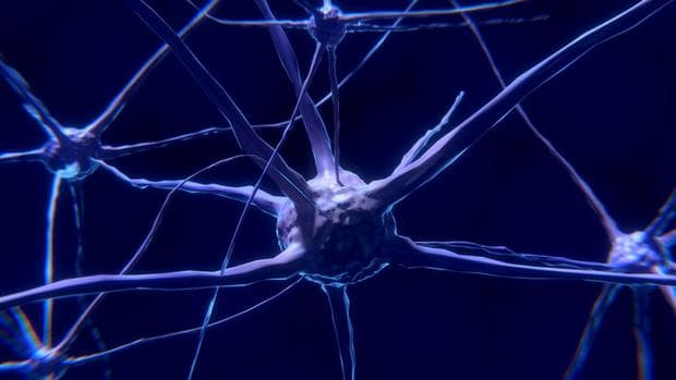 Дигитална реконструкция на група неврони