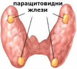 Локализация на паращитовидните жлези