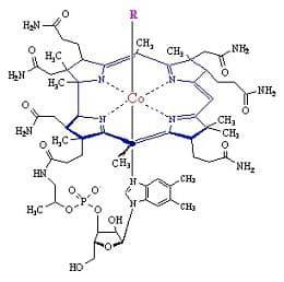 структура на витамин В12