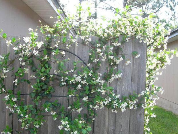 флорална декорация с жасмин