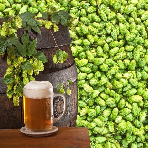 хмел и пиво