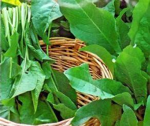 листа от лапад