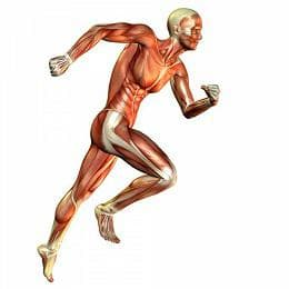 мускули